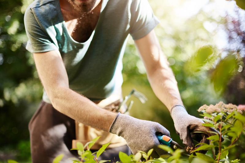 gardening at home